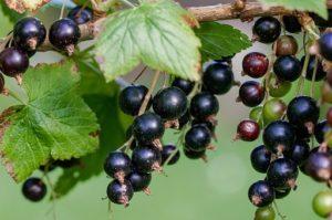 antioksidanti v prehrani proti prehladu