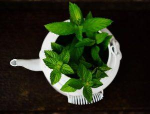zdravilna zelišča proti prehladu
