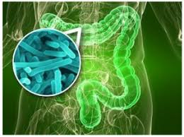 Vita Biosa naravni probiotik