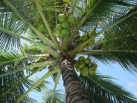kokosovo olje kje kupiti
