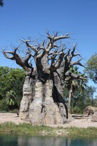 tropsko drevo kruhovec